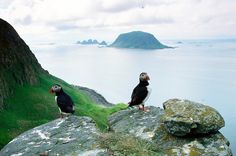 Frailecillos en Vesterålen - Norway The Golden Compass, Beautiful Norway, Visit Norway, Norway Travel, Lofoten, Sea Birds, Timeline Photos, Finland, Street Art