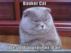 Don t deal with banker cat find a mortgage professional that can help