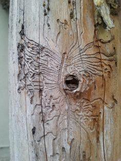 La naturaleza tiene su impulso artista. La mariposa tallada por la carcoma…