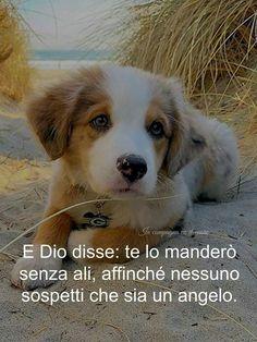 Frasi Sui Cani Trovati.109 Fantastiche Immagini Su Il Mondo Dei Cani Nel 2020 Cani