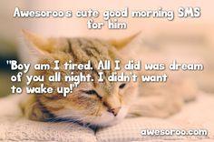 cute sleeping cat in morning