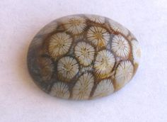 All That Glitters - Photographs of Unique and Unusual Gemstones (not categorized into our other species related pages). Fossilized Coral, Rocks And Gems, All That Glitters, Fossils, Natural Stones, Sculpting, Minerals, Decorative Plates, Shapes