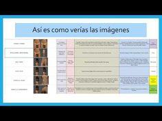 EL MEJOR LIBRO DE BIOMAGNETISMO CLINICA 1 - YouTube