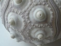Sea urchin detail::Janine Berben via flickr