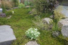 Natives - Xanthe White Natural Contour, Outdoor Living, Outdoor Decor, Native Plants, The Rock, Nativity, Garden Design, Landscaping, Gardens
