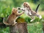 Kočka a Kočka,vždycky vznikne Kočka
