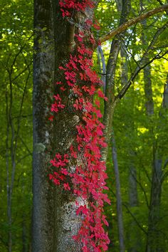 Fall in the Smoky Mountains.