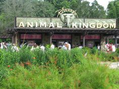 The Disney's Animal Kingdom One Day Must See Guide | Disney World Blog Discussing Parks, Resorts, Discounts and Dining | Only WDWorld