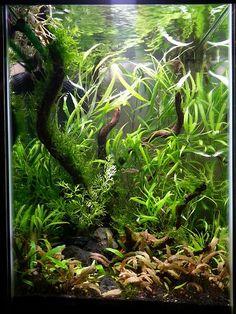 Aquarium Terrarium, Glass Aquarium, Aquarium Design, Aquarium Fish Tank, Planted Aquarium, Aquarium Aquascape, Aquascaping, Aquarium Maintenance, Amazing Aquariums
