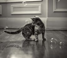Inspiring picture bubbles, cat, cute, hey!, kitten, kitty.