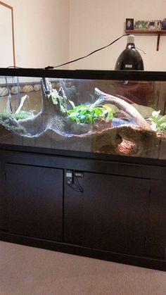 47 Best Ideas For Pet Snake Habitat Diy Reptile Enclosure Tarantula Habitat, Tarantula Enclosure, Reptile Habitat, Reptile Room, Reptile Cage, Reptile Enclosure, Terrarium Tank, Terrarium Reptile, Paludarium