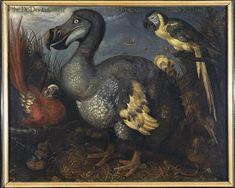 The famous oil painting of a dodo by 17th-century artist Roelandt Savery