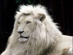 White Lions In The Wild | Thailand: Police Discovered ZOO Inside a House in Bangkok