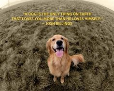 A dog is the only soul on earth that loves you more than he loves himself..