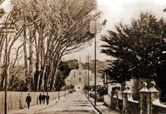 Church Street, Wynberg, Cape Town.Church Street, Wynberg, showing the Dutch Reformed Church up the road, on Carr's Hill. Nowadays, photographs of the street would include the Wynberg magistrate's court , at right, and Maynardville Park at left. 1900 | Flickr - Photo Sharing! My Land, African History, Places Of Interest, Old Buildings, Cape Town, Old Photos, South Africa, Scenery, Street