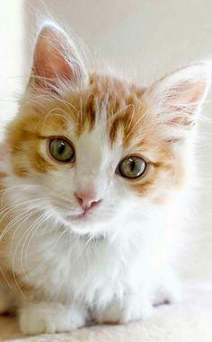 .sweet kitten. t