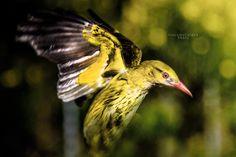 Yellow Bird by Giacomo Cardea on 500px