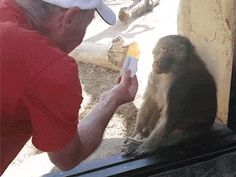 Share this Monkey surprised by magic trick Animated GIF with everyone. Gif4Share is best source of Funny GIFs, Cats GIFs, Reactions GIFs to Share on social networks and chat.