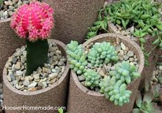 how to build and plant a succulent garden, diy, flowers, gardening, how to, succulents, Fill with pea gravel for drainage and soil Then planted the succulents