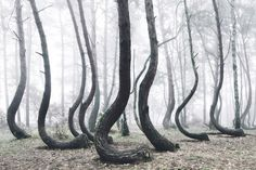 The Crooked Forest (2015), Kilian Schönberger.