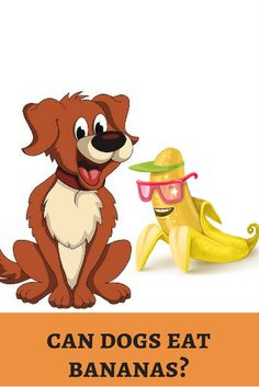 Bananas are healthy diet on our cardiac workout. Is it safe for dog's health? Peel off! http://dogbabe.com/are-bananas-good-for-dogs/