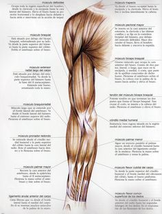 Bones And Muscles, Anatomy Reference, Fat To Fit, Acupressure, Butt Workout, Cot, Glutes, Human Body, Thighs