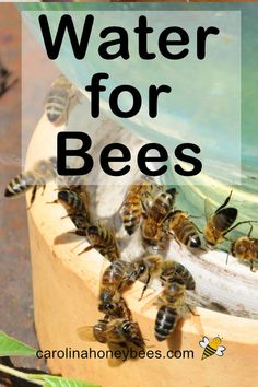 Providing water for bees and other pollinators is fun and easy to do. You can create your own bee watering station and help all the thristy pollinators. How To Start Beekeeping, Beekeeping For Beginners, Hives And Honey, Honey Bees, How To Help Bees, Water For Bees, Natural Landscaping, Backyard Landscaping, Bee Rocks