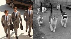 """sirchronofrost:  似て非なるもの:猫とイケメン比較画像:ザイーガ  """