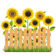 Wooden Fence with Sunflowers Royalty Free Vector Image Sunflower Clipart, Sunflower Art, Class Decoration, School Decorations, Boarders And Frames, Boarder Designs, Illustrator Cs5, Wooden Fence, Leaf Art