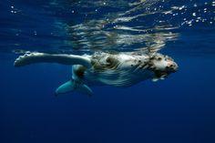 Flipper high five