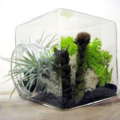 Moss Cube Tillandsia Terrarium