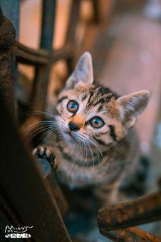 Magical Meow : Photo