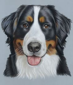 Pet Portraits & Animal Art Portfolio - Dog Portraits, Cat Portraits, Equestrian and Animal Art hand drawn or painted from your favourite digital photographs by UK Pet Portrait Artist Donna Cartoon Dog, Cartoon Drawings, Burmese Mountain Dogs, Dog Paintings, Bernese Mountain, Dog Portraits, My Animal, Dog Art, Dog Pictures
