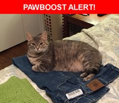 Please spread the word! Princess was last seen in Austin, TX 78745.
