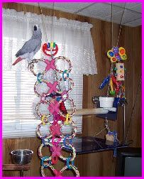 Use dog toys to make a ladder for your birds! Get several double braided ring dog toys. Use shower curtain rings or zip ties to connect the dog toys in a ladder pattern. Diy Parrot Toys, Diy Bird Toys, Cockatiel Toys, Budgies, Parrots, Bird Aviary, Bird Perch, Homemade Bird Toys, Parrot Play Stand