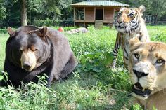 <b>Lions, tigers, and bears!</b> Oh my!