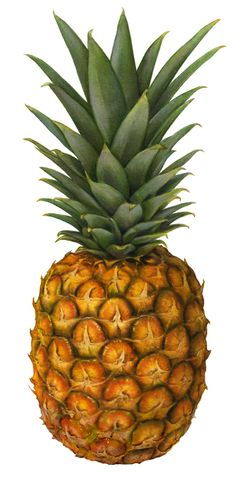From the beginning of my art career I specialized in still life imagery. Soon, I was illustrating a lot of fruit. Therefore, I not only considered my niche to be one of being a food illustrator, so… Fruit Illustration, Food Illustrations, Botanical Illustration, Pineapple Illustration, Fruit And Veg, Fruits And Vegetables, Fresh Fruit, Pineapple Art, Pineapple Syrup