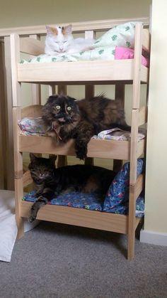 Klösträd och kattlådor kanske inte är det snyggaste som finns. Men med hjälp av Ikea, samt lite fantasi och kreativitet så är det enkelt att tillverka roliga och användbara prylar till din katt – så kallade ikea-hack.