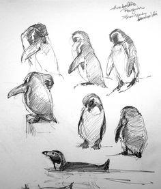 """Humboldt's penguins, Copenhagen Zoo, pencil on Robert Bateman 8 1/2"""" x 11 sketchbook."""