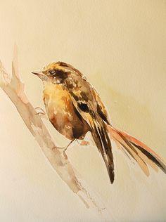 Serie en Acuarela - Aves endémicas de Chile de Carolina Costa Jungjohann - Artista Chilena