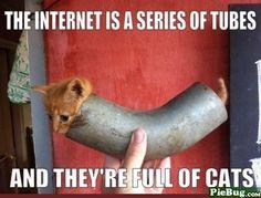 Internet Cat Tubes