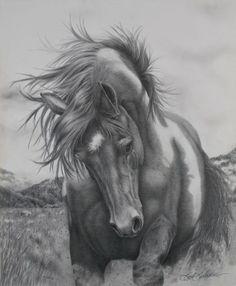 Barb Schacher Fine Art — Portrait, Equine, Wildlife Pencil Drawing Artist