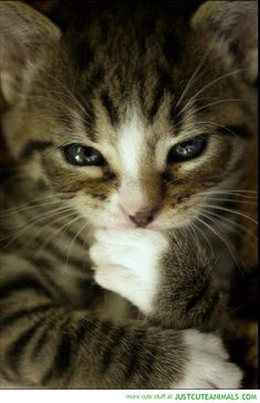 evil plan cat lolcat thinking cute animals wild wildlife species planet earth nature pics pictures photos images