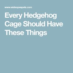 Every Hedgehog Cage Should Have These Things