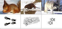 Montessori, Cicely Mary Barker, Animal Tracks, Fish Art, Animal Pictures, Kangaroo, Winter, Kindergarten, Rabbit