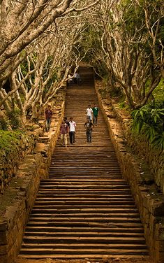 Mihintale, Sri Lanka - 1840 steps, bordered with frangipane trees, leading to Mihintale, where the story of Sri Lankan Buddhism began.
