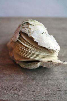 clam shell book by erika ekrem (odelae)