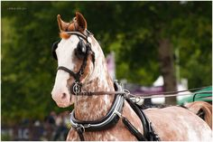 who doesn't like a lit-up, blingy Dutch Harness Horse? *drooool*