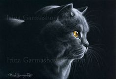 Feline Fine Art~British Blue in The Spot of Light by Irina Garmashova-Cawton
