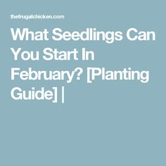 What Seedlings Can You Start In February? [Planting Guide] |